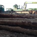eikenhout stammen